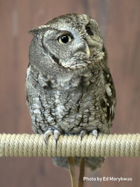stage-owls-003.jpg