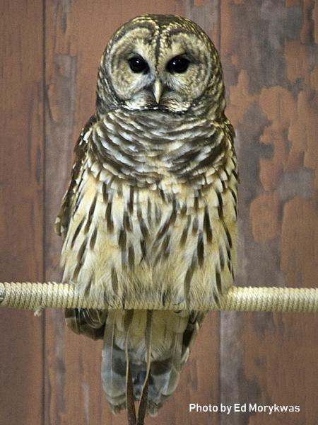 stage-owls-004.jpg