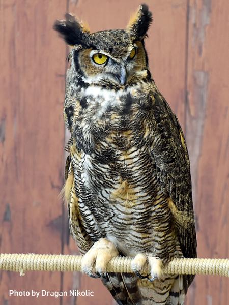 stage-owls-007.jpg