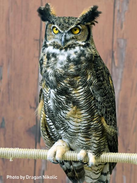 stage-owls-008.jpg