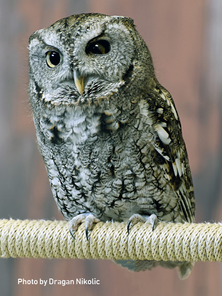 stage-owls-009.jpg