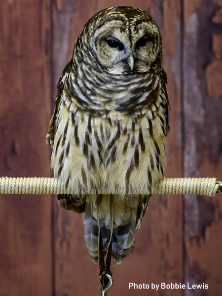 stage-owls-010.jpg