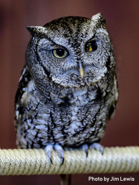stage-owls-011.jpg