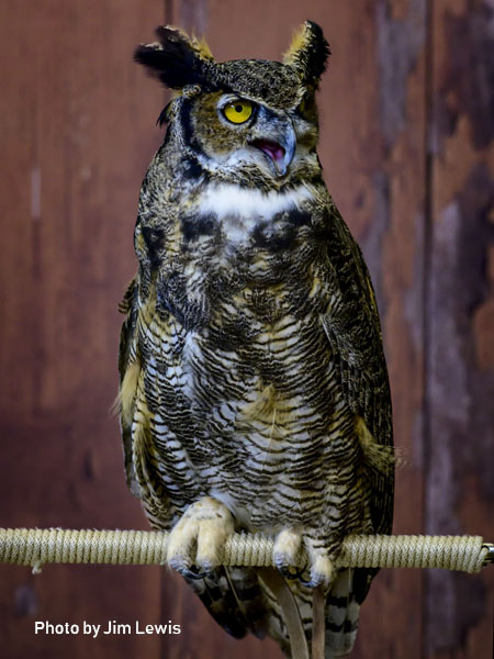 stage-owls-012.jpg