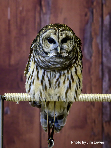 stage-owls-013.jpg