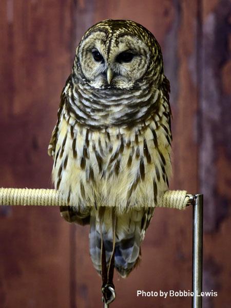 stage-owls-014.jpg