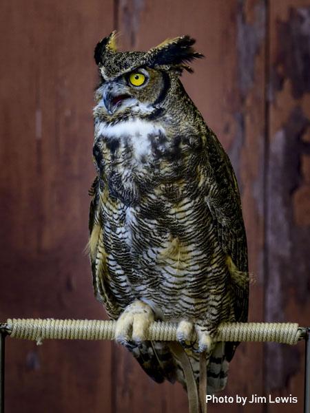 stage-owls-016.jpg