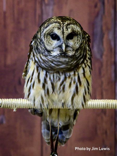 stage-owls-017.jpg
