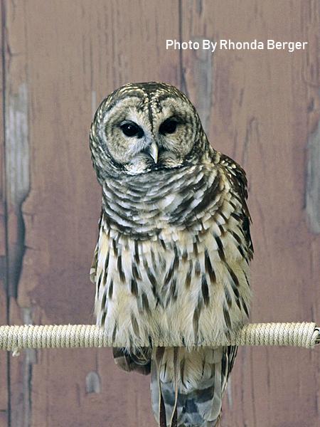 stage-owls-019.jpg