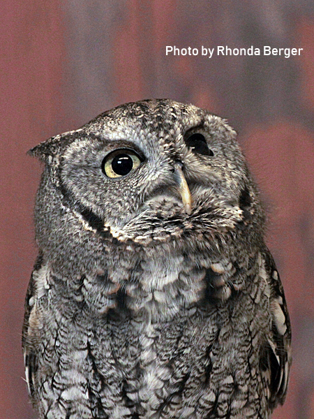 stage-owls-020.jpg