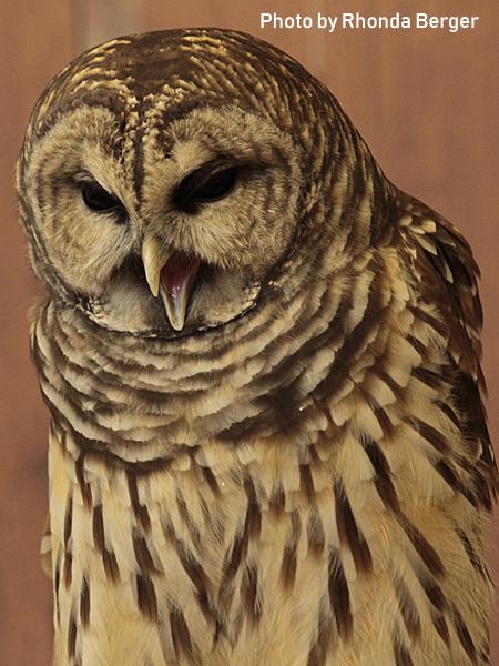 stage-owls-021.jpg