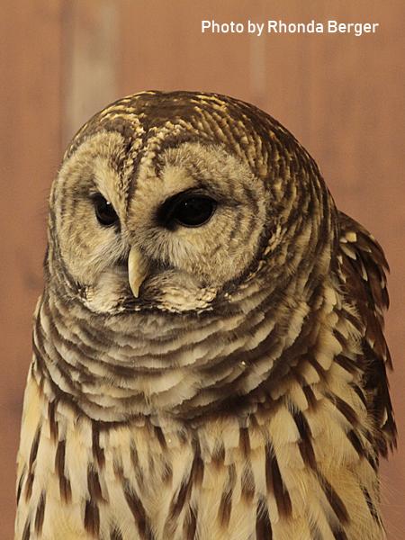 stage-owls-022.jpg