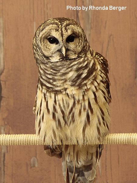 stage-owls-023.jpg