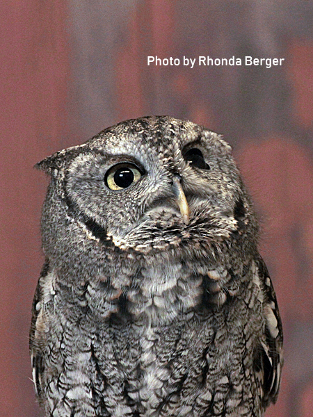 stage-owls-025.jpg
