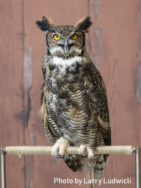 stage-owls-026.jpg