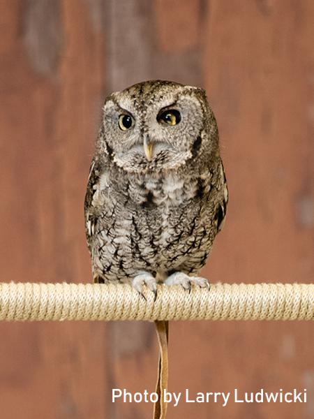 stage-owls-027.jpg
