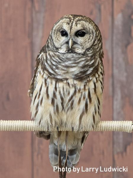 stage-owls-028.jpg