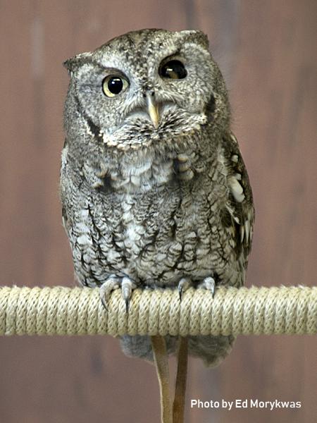 stage-owls-05.jpg