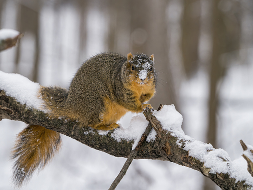 squirrel-12-31-19_ss11